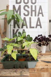 tuinkamer voordelen nadelen seizoen huis en tuin